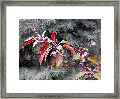 Framed Print featuring the photograph Flowering Tree 3 by Gerald Strine
