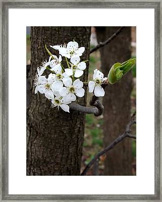 Framed Print featuring the photograph Floweringtree 2 by Gerald Strine