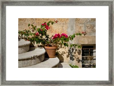 Flowerpot On Stairs In Kocura Croatia Framed Print