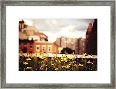 Flowers - High Line Park - New York City Framed Print by Vivienne Gucwa