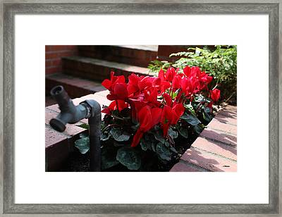 Flowers And Water Spout Framed Print by Luke Robertson