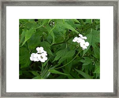 Flowers Framed Print by Annella Grayce