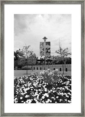 Flowers At Citi Field In Black And White Framed Print by Rob Hans