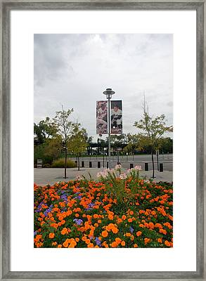 Flowers At Citi Field Framed Print by Rob Hans