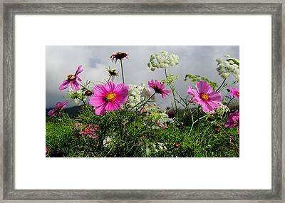Flowers Framed Print by Barbara Walsh