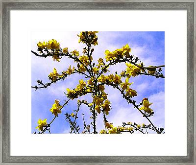 Flowers Cascade Framed Print by Guadalupe Nicole Barrionuevo
