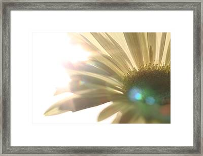 Flowers Framed Print by Falko Follert