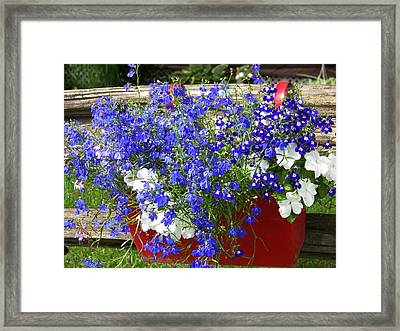 Framed Print featuring the photograph Flowers For Summer by Robin Regan