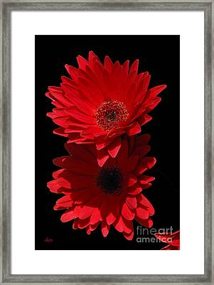 Framed Print featuring the photograph Flowers From My Son by Cindy Manero