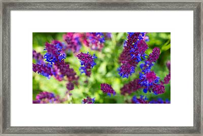 Flowers Framed Print by Guillermo Luengas