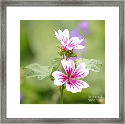Flowers In The Garden 2 Framed Print