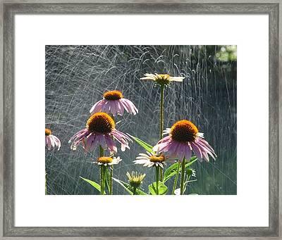 Flowers In The Rain Framed Print by Randy J Heath