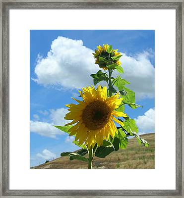 Framed Print featuring the photograph Flowers In The Sun by Bonnie Muir