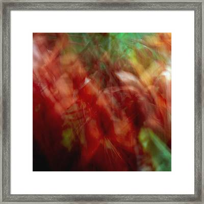 Flowers In The Wind 2 Framed Print by Skip Nall