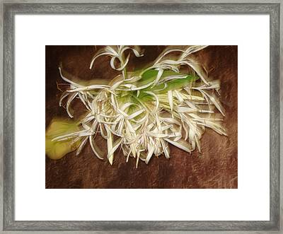 Flowers Framed Print by Indrani Moitra