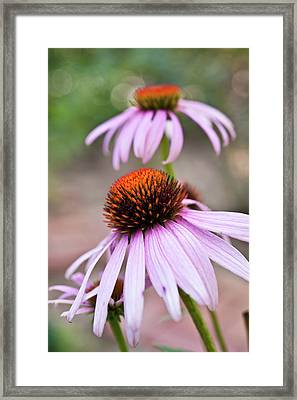 Flowers Framed Print by invisibleA