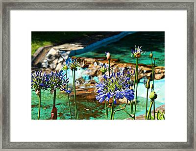 Flowers Framed Print by Jenny Senra Pampin