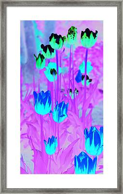 Framed Print featuring the photograph Flowers by Josef Pittner