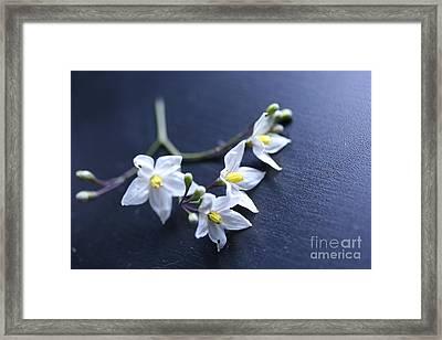 Flowers On A Table Framed Print
