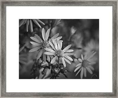 Flowers On Blue Ridge Parkway Framed Print