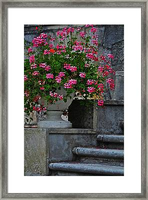 Flowers On The Steps Framed Print by Mary Machare