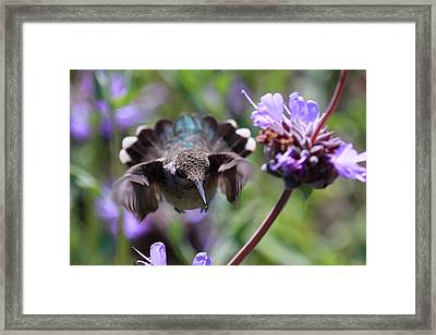 Flowers Framed Print by Paul Marto