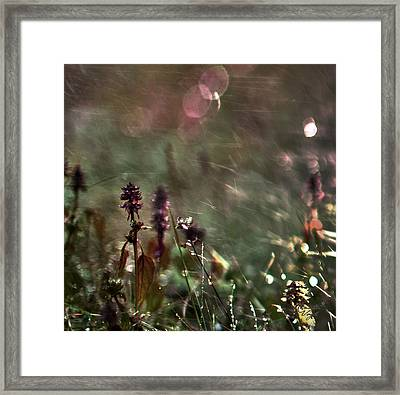 Flowers Framed Print by Renata Vogl