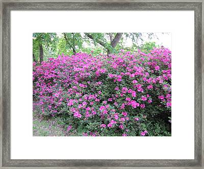 Framed Print featuring the photograph Flowers by Shawn Hughes