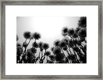 Flowers Standing Tall Framed Print