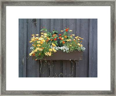 Flowers Summer Blooms On The Barn Framed Print