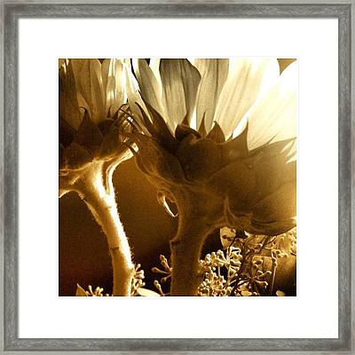 #flowers #sunlight #justbecause Framed Print