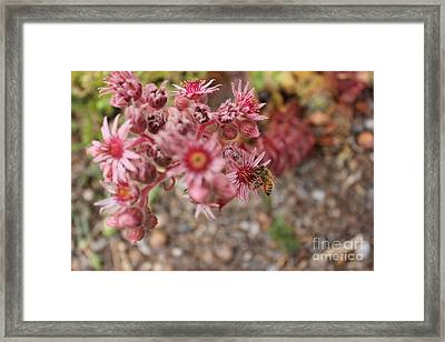 Flowers With Bee Framed Print