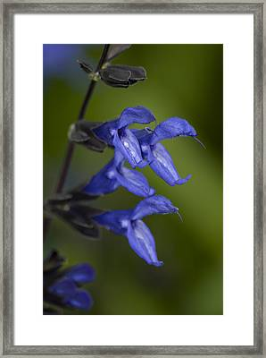 Flowers With Water Drops Framed Print