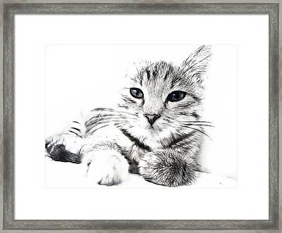 Fluff Framed Print by Tilly Williams