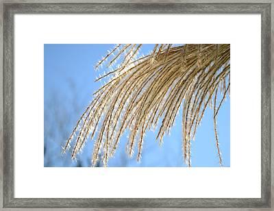 Fluffy Grass Framed Print by Paula Deutz