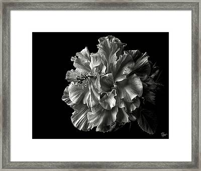 Fluffy Hibiscus In Black And White Framed Print