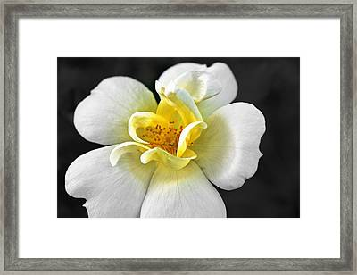 Fluffy Little Life Framed Print by Hannah Miller