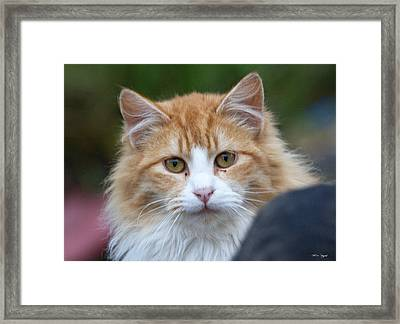 Fluffy Orange Framed Print