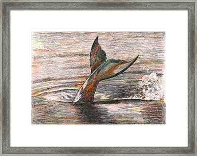 Fluke In Glacier Bay Alaska Framed Print
