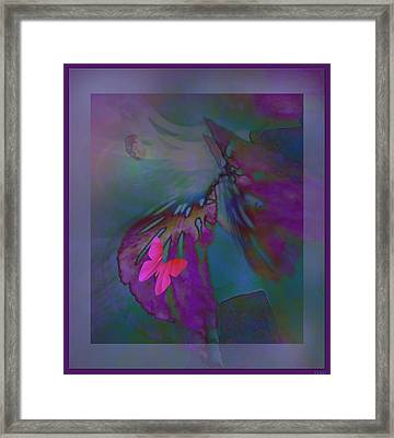 Flutter Of The Butterfly Framed Print by Debra     Vatalaro