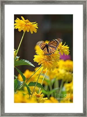 Fluttering Monarch Butterfly Framed Print by Lila Fisher-Wenzel