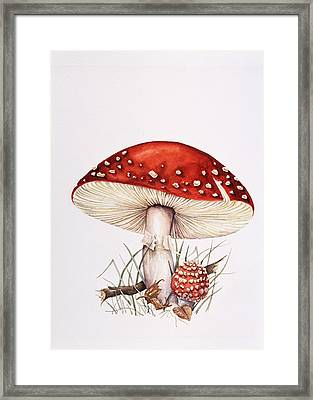 Fly Agaric Mushrooms Framed Print by Lizzie Harper