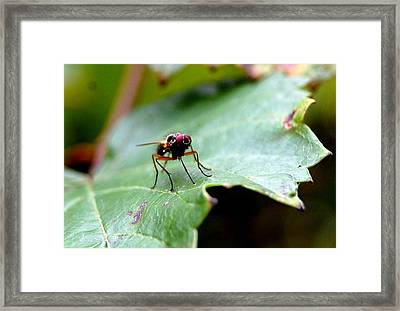 Fly Away Framed Print by Beverly Hammond
