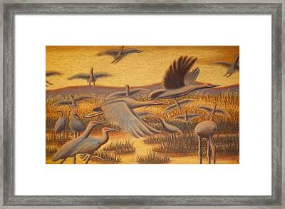 Fly Away Framed Print by Thomas Maynard