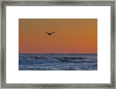 Fly By Framed Print by Charles Warren
