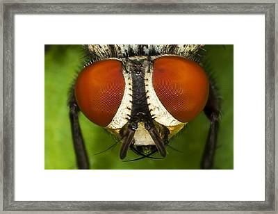Fly Eyes Framed Print