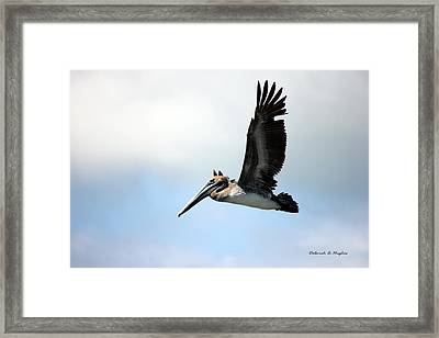 Fly Free Framed Print