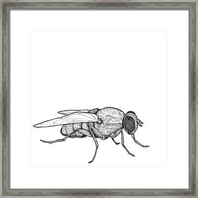 Fly Framed Print by Karl Addison