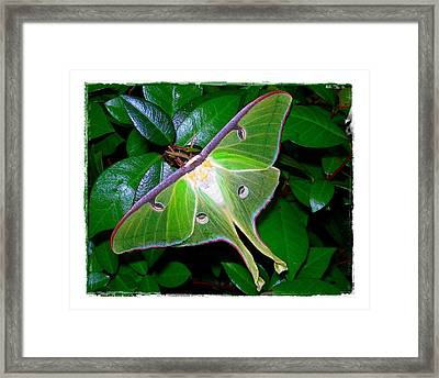 Framed Print featuring the photograph Fly Me To The Moon by Judi Bagwell
