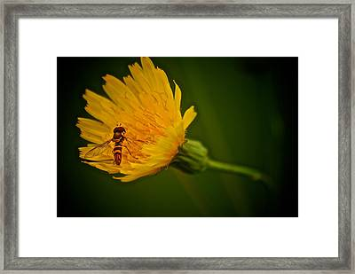 Fly On A Flower Framed Print by Andre Faubert
